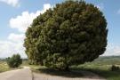 Projet de film sur les arbres dans l'espace public, urbain et rural. Prises de vue depuis 2012. Finalisation des prises de vue et montage en 2014.